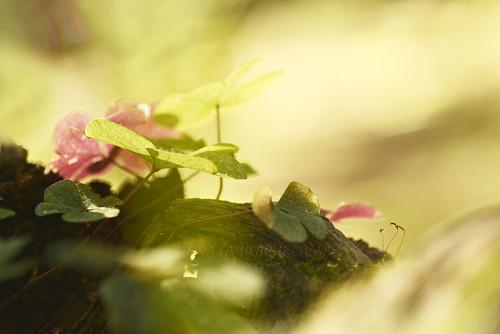 Lesní zahrádka - autorská fotografie