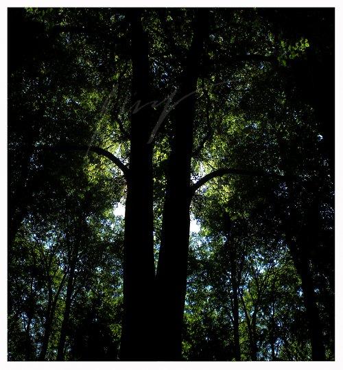 Dvojčata v letním lese..