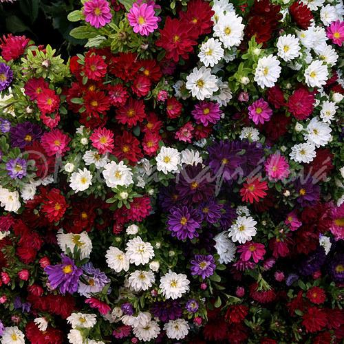 Záplava květin