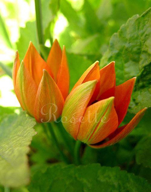 Svěží ráno na zahradě ...  - autorská fotografie