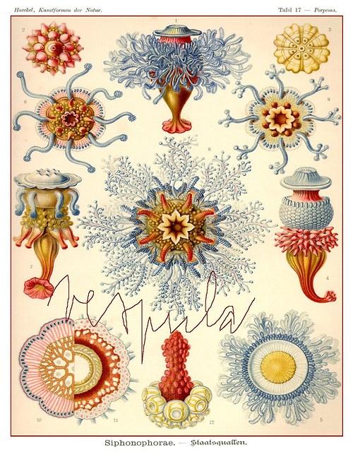 Moře je šperkovnice I