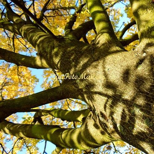 Strom v podzimním hávu IV