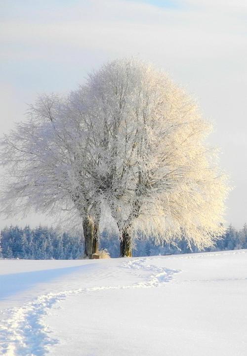 Byla cesta, byla ušlapaná ...vánoční pohlednice *