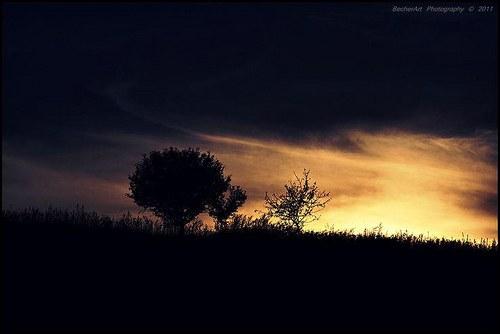 The Septembre Tree
