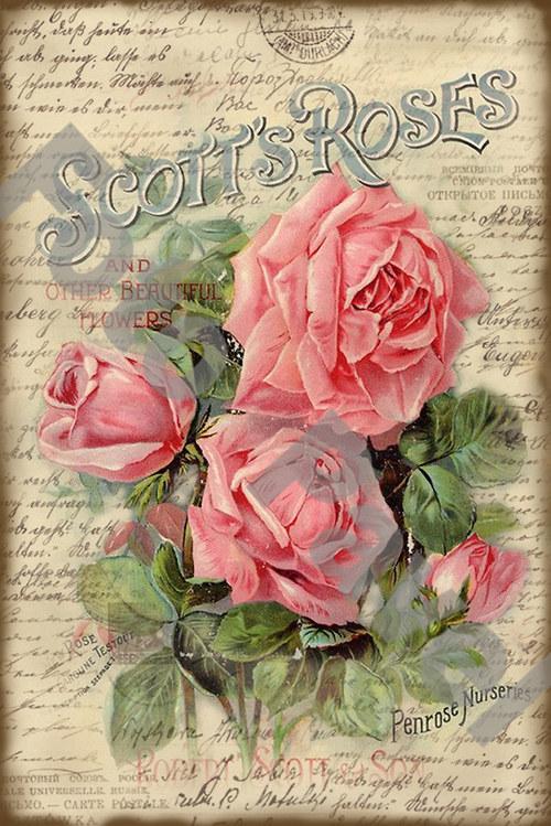 Vintage motiv - květiny - růže
