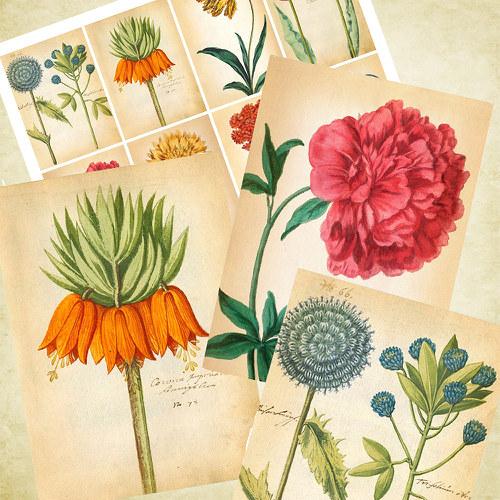 Nažehlovací obrázky - Botanicus - cena za 8 ks