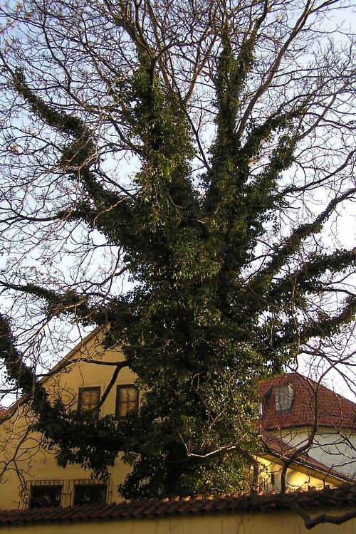 Strom, zvíře nebo mimozemšťan?