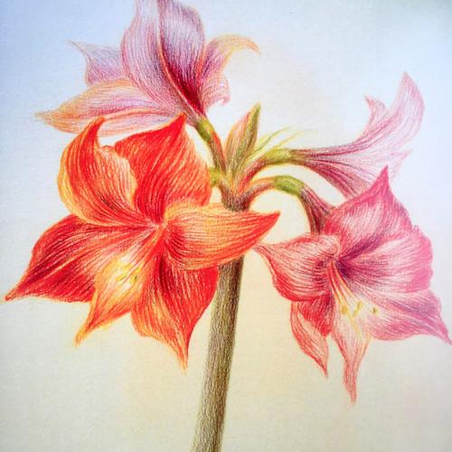 Rozvíjej se poupátko, nejmilejší z květů...