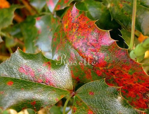Když se podzim začervená ... - autorská fotografie