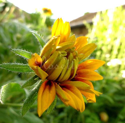 Léto začíná - autorská fotografie