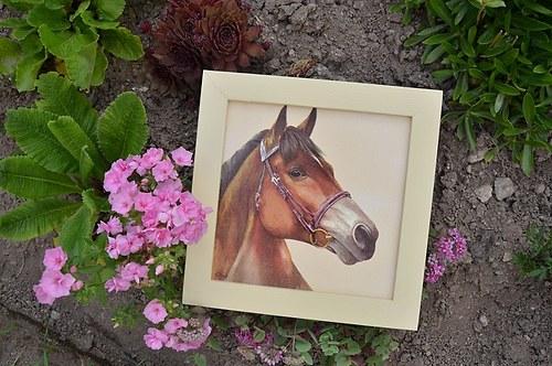 Obrázek - koně