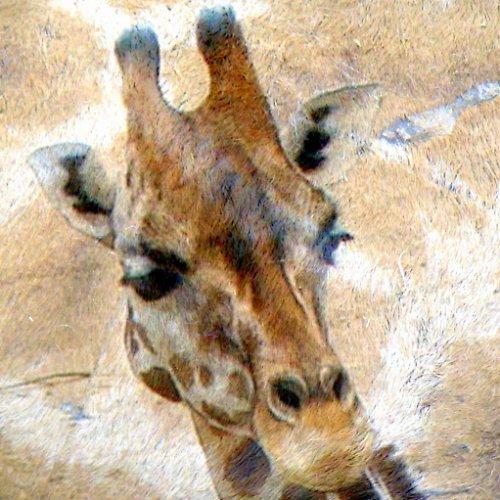 "Podložka pod myš \""Žirafa\"""