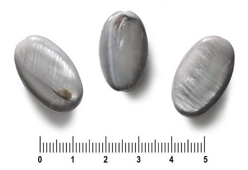 Perleťový oválek šedý, 16 x 25 mm, 1 ks