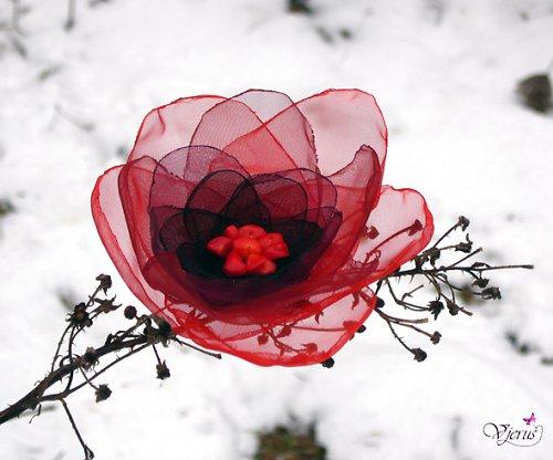 Korálová růže