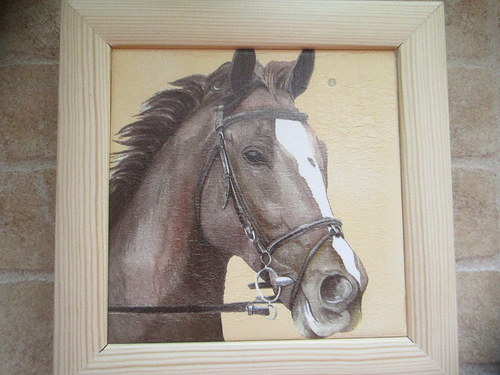 Kůň 4