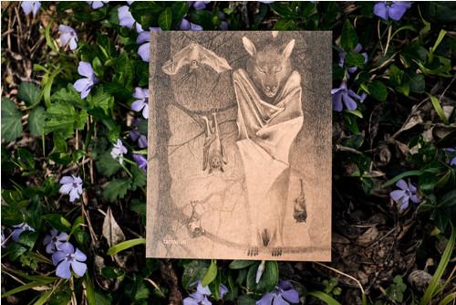 Kaloň v šerosvitu • pohlednice kraftová