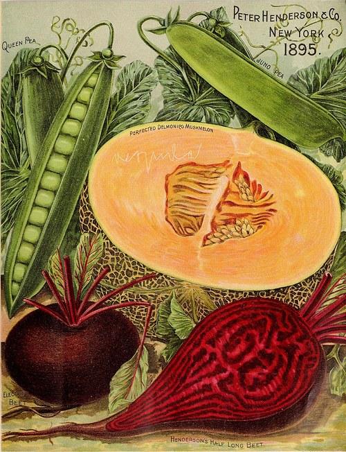 Reklama zelenina I