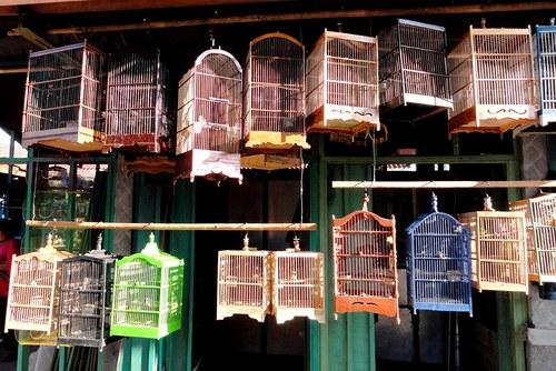Ptačí trh