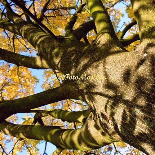 Strom v podzimním hávu V