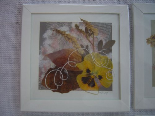 Obrázky z lisovaných květin v paspartě