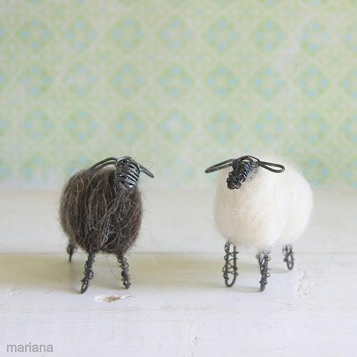 ovečky, černá a bílá