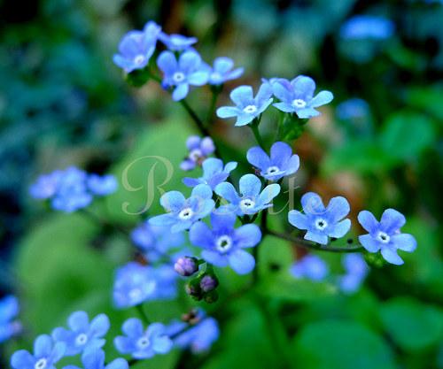 V království modré ... - autorská fotografie