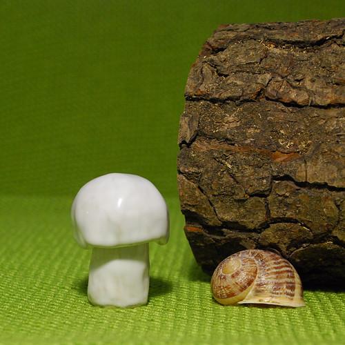 Vítěz houbového žampionátu (výška 5 cm) č. 1