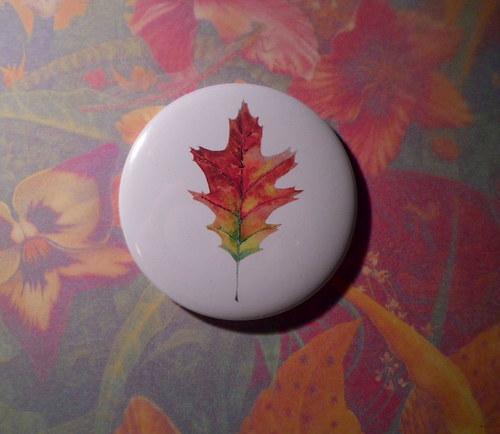 Quercus rubra. Magnet 56mm.