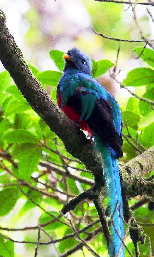Ptačí klenot z mlžných horských lesů