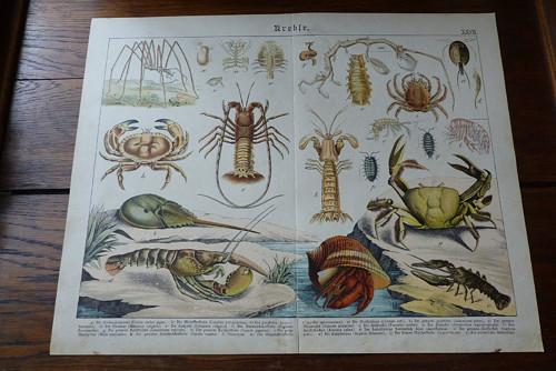 Originál litografie z 19. století, krabi