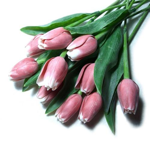 Tulipán červeno-bílý