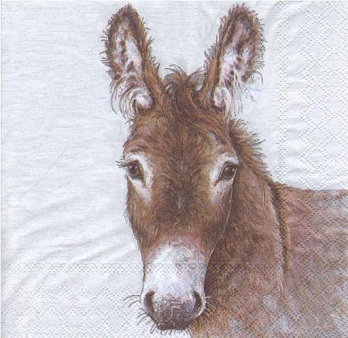 Ubrousek - mladý oslík