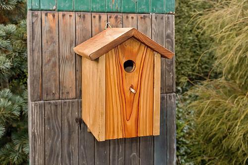 Ptačí budka - Krutihlav