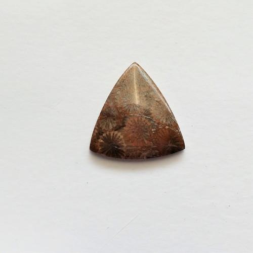 korál fosilní 22 kabošon 34 x 33 x 6 mm