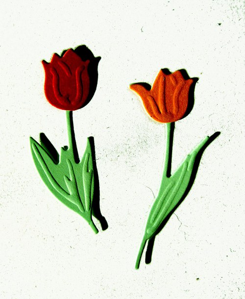 Dva tulipány