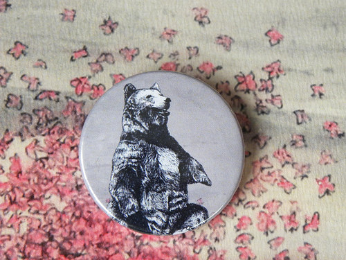Placka medvěd