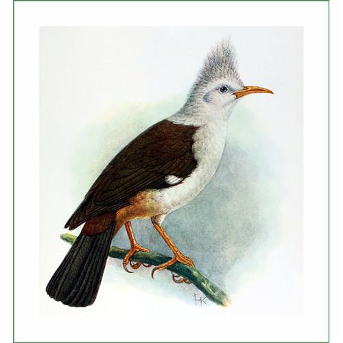 ptáček (16) - J.G.Keulemans  (látkový panel)