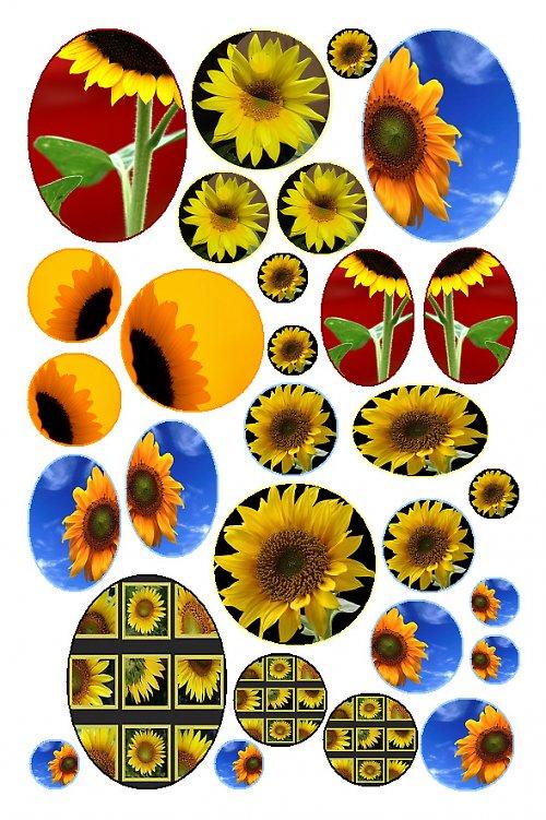 slunečnice 02