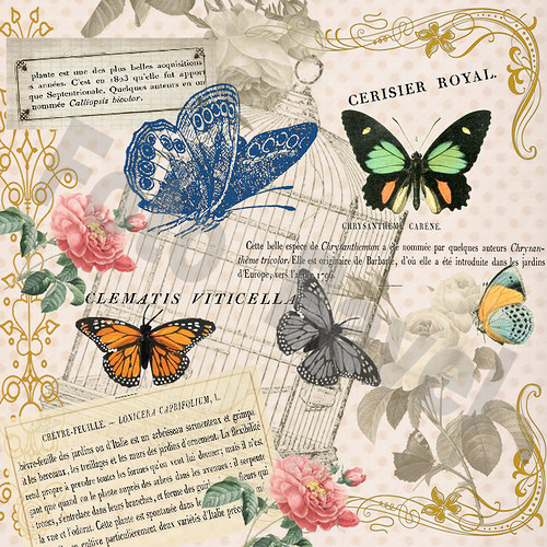 Vintage motiv - motýl