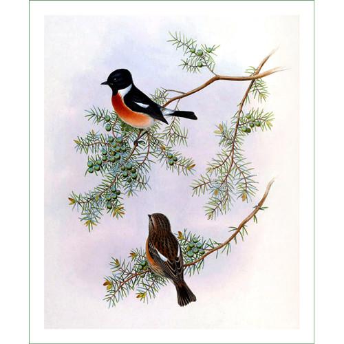 ptáci (28) - H.C.Richter  (látkový panel)