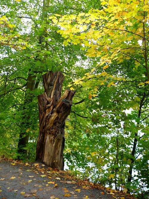 Torzo stromu