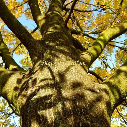 Strom v podzimním hávu VI
