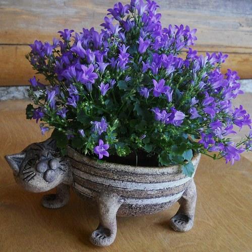 Kočičí květináč pruhovaný