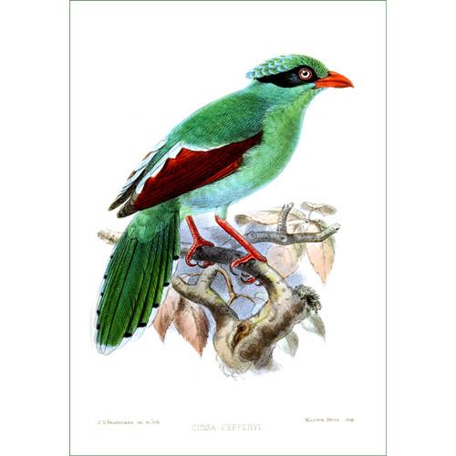 ptáček (21) - J.G.Keulemans  (látkový panel)