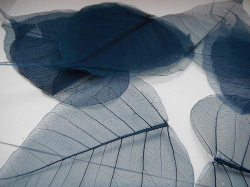 skeletový list-modrý