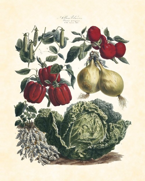 Zelenina II