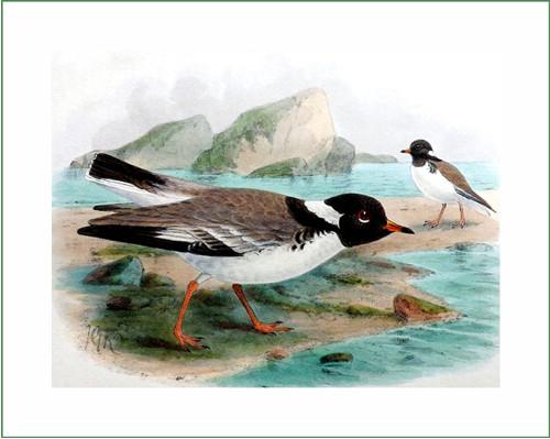 ptáci (35) - J.G.Keulemans  (látkový panel)