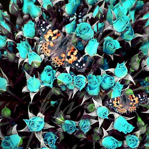 Motýlí nálet na zimní kvítí..