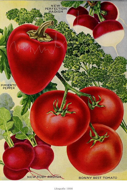 Reklama zelenina II