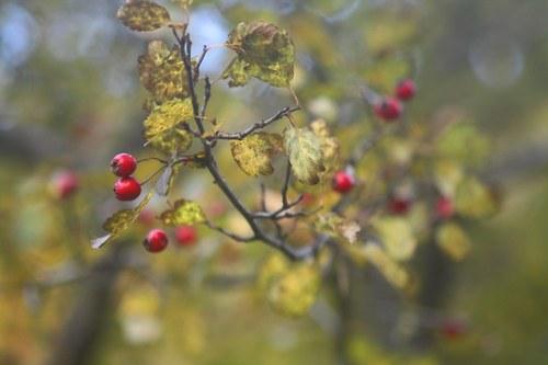 Podzimní ozdůbky